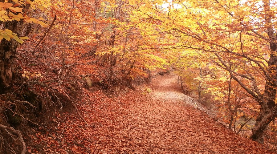 Tejera Negra en otoño. Mejores paisajes