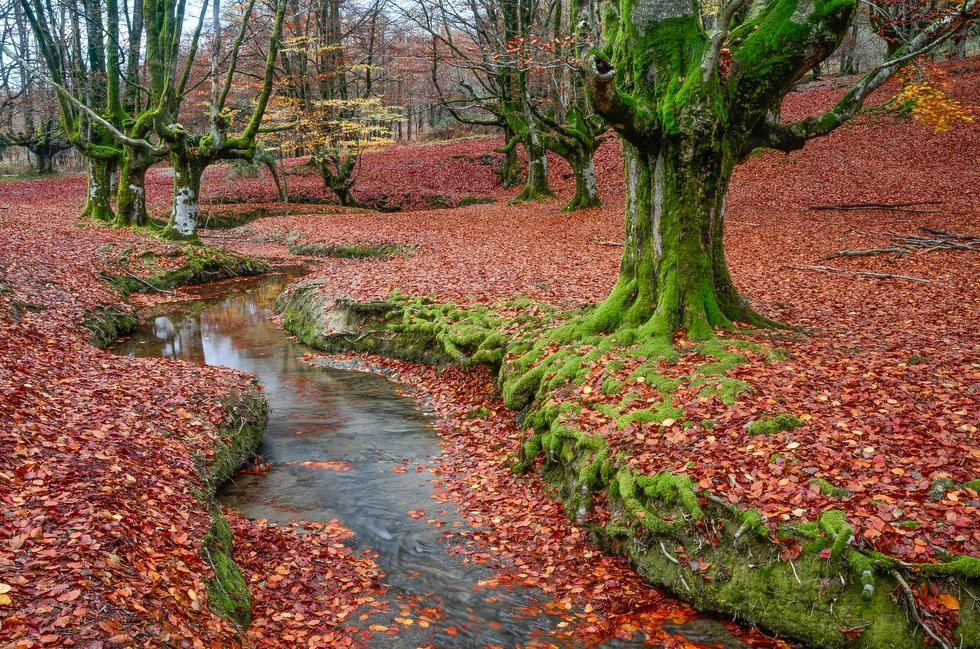 Hayedo de Otzarreta en otoño