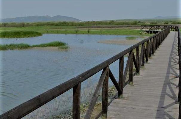 Camino por la laguna