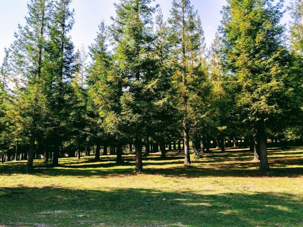 El Bosque de Colón.