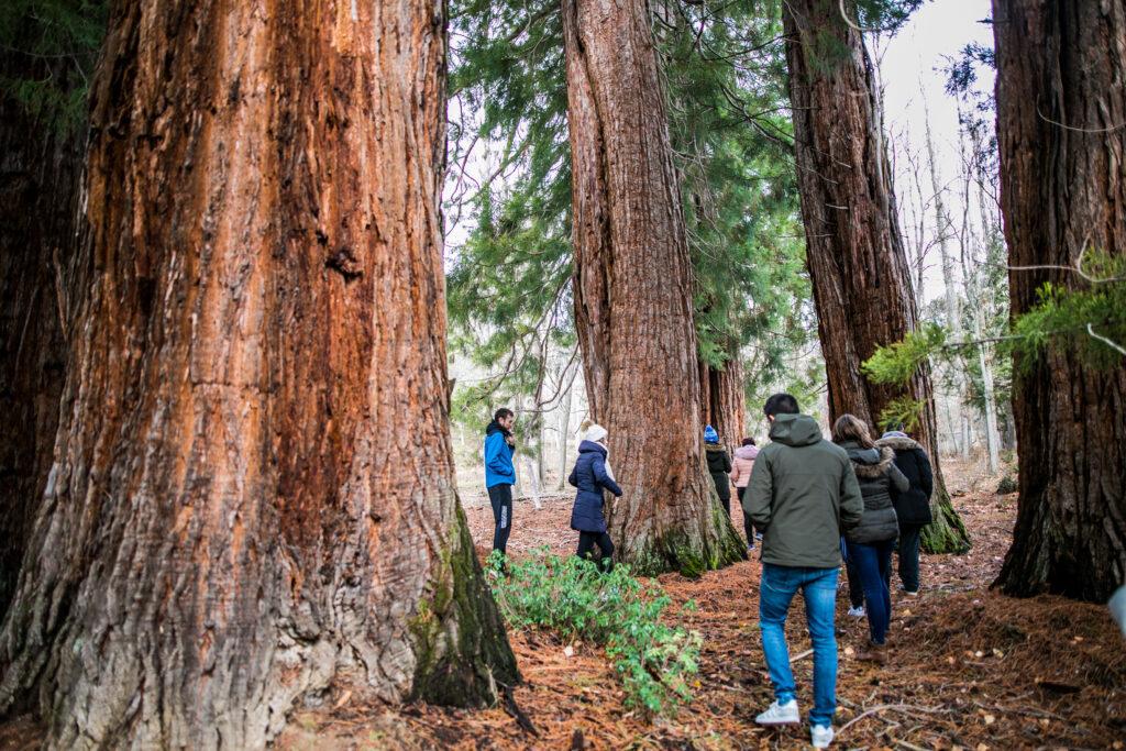 Bosque de Secuoyas. Foto cedida asociación Cronos